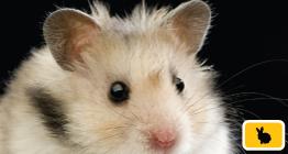 Poster-Hamster