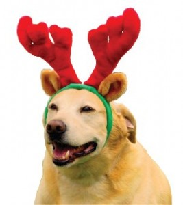 dog antlers